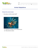 Animal Adaptations - biology - Second Grade