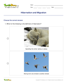 Hibernation and Migration - biology - Second Grade